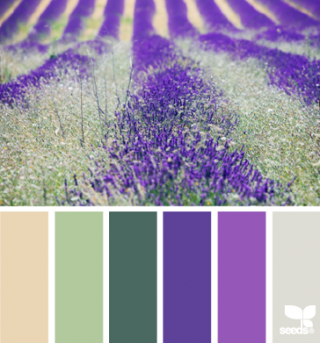 Lavender fields color inspiration.